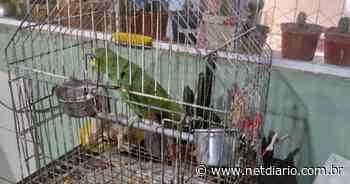 UPAM encontra dois papagaios encontrados em cativeiro em Teresópolis - NetDiário