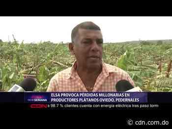 Elsa provoca pérdidas millonarias productores plátanos en Oviedo, Pedernales - CDN