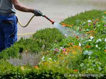 Mieter zahlen auch für Gartenpflege - Freie Presse