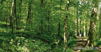 Kraichtal: Durchatmen am geheimnisvollen Pfannwaldsee - Rhein-Neckar Zeitung