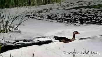 Schaum auf Zierker See in Neustrelitz gibt Rätsel auf - Nordkurier
