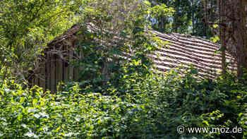Biosphärenreservat Schorfheide-Chorin: An der Blumberger Mühle sind viele Pflanzen und Tiere heimisch - moz.de