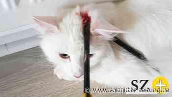 Mann räumt Pfeilschuss in Liebenburg auf Katze Nuri ein - Salzgitter Zeitung