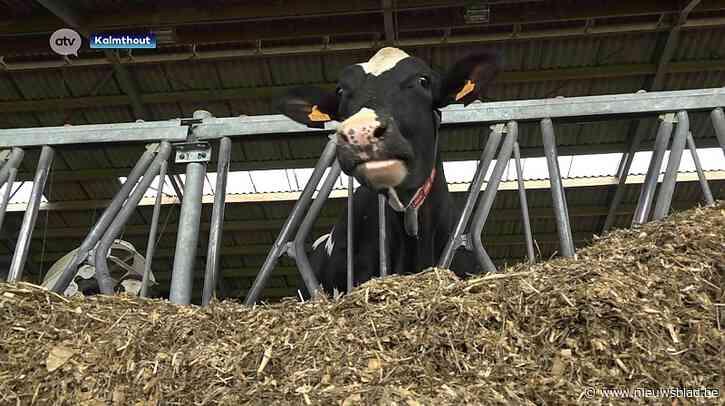Koeienmest uit Kalmthout voorziet 60 gezinnen én Werchter Parklife van stroom