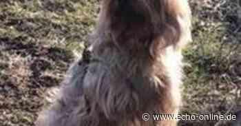 """Weiterstadt: A 5 wegen """"Lilli"""" gesperrt/Yorkshire-Terrier schnappt zum Dank nach Autobahnpolizist - Echo Online"""