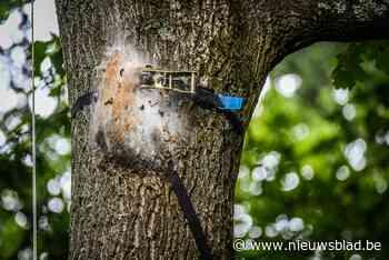 """Voor het eerst eikenprocessierups in Zoetwaterpark: """"Geen groot gevaar voor spelende kinderen"""""""