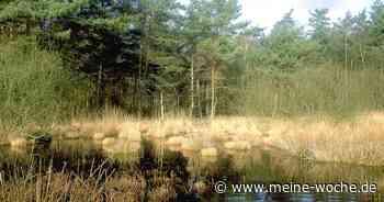 Radroute des Monats Juliim Kreis Viersen führt in den Grenzwald - Meine Woche