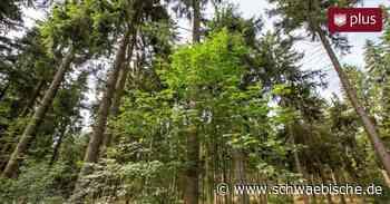 Geplanter Klimawald in Weingarten wackelt | schwäbische - Schwäbische