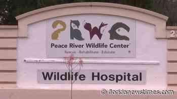 Peace River Wildlife Center is preparing for Elsa - Floridanewstimes.com
