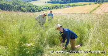 Lions-Club Idstein: Staffelübergabe und Baumpflege - Wiesbadener Kurier