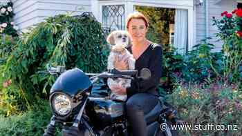 Meet a pooch with plenty of panache living in a 1920s Palmerston North bungalow - Stuff.co.nz