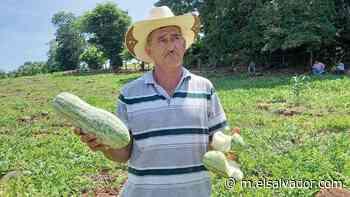 Los agricultores de Intipucá están agobiados por daños en las plantaciones de sandías - elsalvador.com