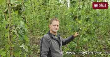 Unwetter trifft Hopfengärten in Tettnang mit voller Wucht - Schwäbische