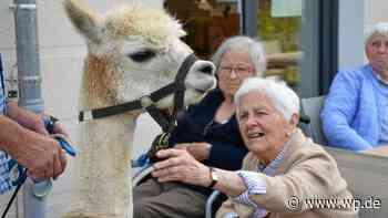 Sundern: Alpakas lassen manchen Kummer vergessen - Westfalenpost