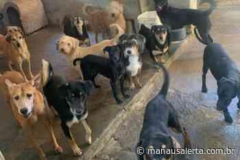 Homem mata cachorro com tiro de espingarda em Manacapuru e pode ficar até 5 anos preso - Portal Manaus Alerta