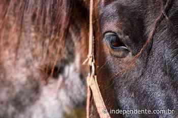 Taquari conta com recolhimento de cavalos em vias públicas sem gastos da prefeitura - independente