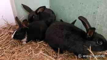 25 Kaninchen in Leimen gerettet - SWR