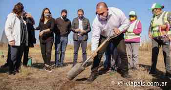 Villa Mercedes: Plantan más de 4.000 árboles a la vera de la ex Ruta 7 - Vía País