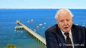 Sir David Attenborough pens letter to save Flinders Pier on the Mornington Peninsula, home to the endangered weedy sea dragon - 7NEWS.com.au