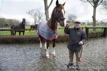 Averij nadat koetspaard op hol slaat (Beernem) - Het Nieuwsblad