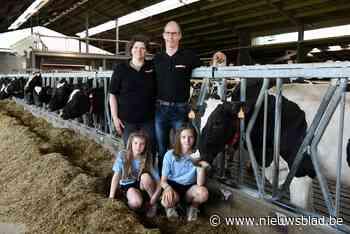 """Deze koeien leveren stroom aan festival én aan gezinnen: """"Hoe meer liefde je zo'n dier geeft, hoe meer het zal produceren"""" - Het Nieuwsblad"""