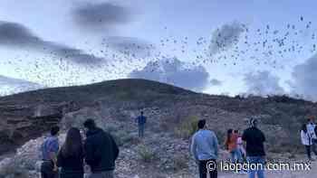 Regalan murciélagos maravilloso espectáculo al anochecer en santa eulalia - La Opcion