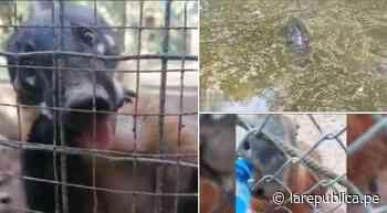 Animales del Parque Natural de Pucallpa están desnutridos y deshidratados - LaRepública.pe