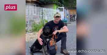 Corona-Hunde noch kein Problem in Weiterstadt und Pfungstadt - Echo Online