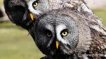 Vogelpark Marlow: Die bunte Vogelwelt bei Ribnitz-Damgarten - NDR.de