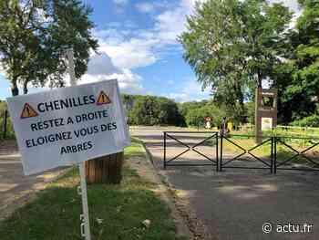 Yvelines. Trappes : le parc de l'île de loisirs fermé à cause des chenilles urticantes - actu.fr
