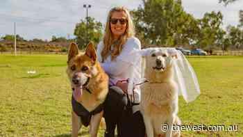 Kalgoorlie dog trainer offers skills to help weddings include beloved dogs - The West Australian