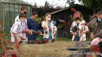 Herseaux : les Projets Montfort, les scouts et guides de Woluwe-Saint-Lambert créent un potager social - Notélé