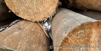 In Holzstapel eingeklemmt: Feuerwehr rettet Katze in Lindlar - Kölnische Rundschau