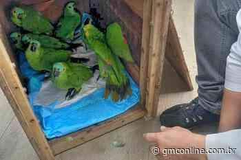 Papagaios vítimas de tempestade na região recebem alta e voltam à natureza - GMC Online