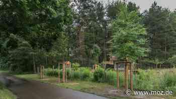 Umwelt : Naturschützer etablieren andere Baumsorten am Straßenrand in Petershagen - moz.de