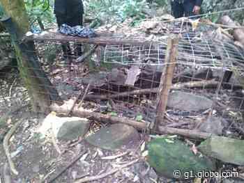 Polícia apreende armadilhas de caça em área de preservação ambiental em Caraguatatuba - G1