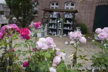 Kiekeberg: Rosenmarkt mit 800 Sorten im Freilichtmuseum - seevetal-aktuell.de