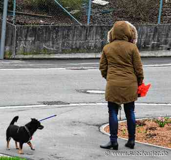 Meckenbeuren: Unbekannter bedroht Hundehalterin - SÜDKURIER Online