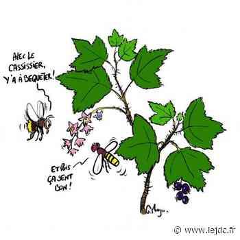 Le cassis souffre de la raréfaction des insectes pollinisateurs - Le Journal du Centre