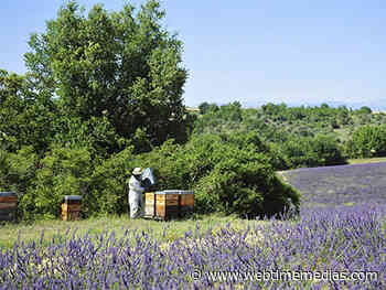 Mouans-Sartoux : le marché des miels de Provence exceptionnellement début août | WebtimeMedias - Webtimemedias.com