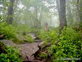 Escarpment Trail Run Escapade