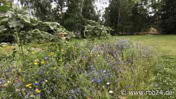 Biosphärenreservat Schorfheide-Chorin: Landwirtschaftsministerium sucht Landwirte für Insektenschutz-Projekte - rbb24