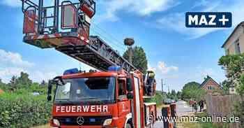 Luckenwalde: Drei junge Störche vor dem Verhungern gerettet - Märkische Allgemeine Zeitung