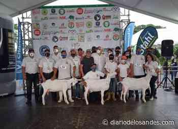 Orgullo: cabra «Preciosa» de Granjasaman Boconó arrasó en tres categorías del Festival Ovino-Caprino de Barquisimeto - Diario de Los Andes