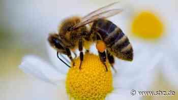 Gefährliche Bienenkrankheit: Faulbrut in Elmshorn: Das rät das Veterinäramt Itzehoe Steinburger Imkern | shz.de - shz.de