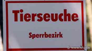 Elmshorn: Bienenseuche breitet sich aus: Kreis erweitert Sperrbezirk | shz.de - shz.de