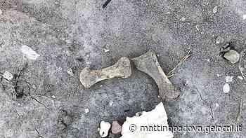 Ossa umane affiorate in cimitero a Monselice. Il Comune avvia un'indagine - Il Mattino di Padova