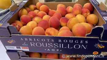 Perpignan : l'AOP abricots rouges du Roussillon présentée au préfet - L'Indépendant