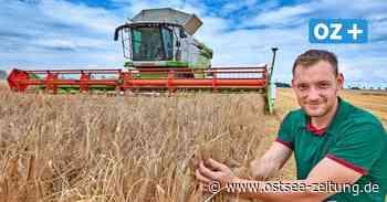 Viel Regen zum Start: So läuft die Wintergerste-Ernte bei Teterow - Ostsee Zeitung