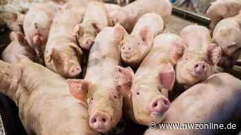 Stall in Goldenstedt: Unbekannte manipulieren Stromversorgung und gefährden Schweine - Nordwest-Zeitung